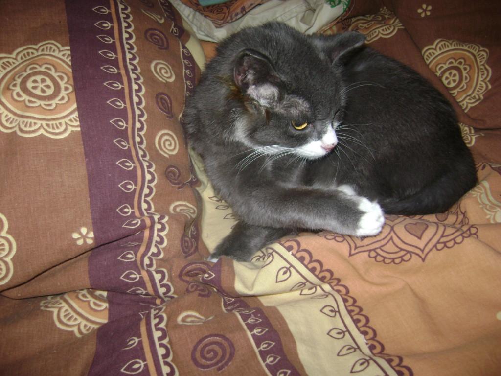 Найденыш кошка Мася